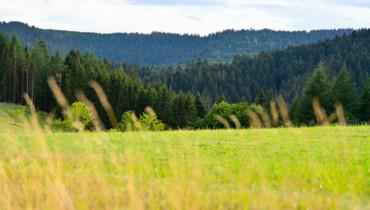 Bild von Wiese und Wälder