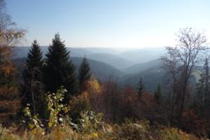 Bild Blick vom Teisenkopfturm Schenkenzell