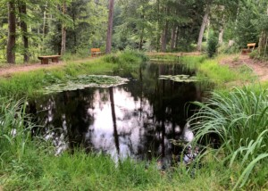 Bild vom Mattenweiher im Sommer