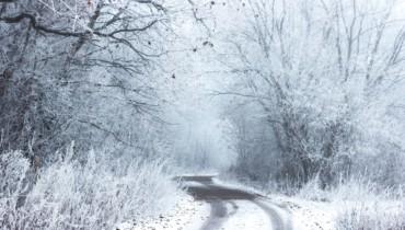 Bild von Straße im Wald mit Schnee
