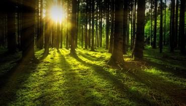 Bild von Wald und Bäume